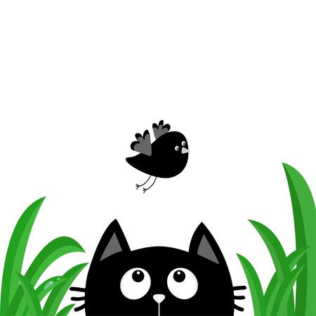 Black cat face head silhouette looking up to flying bird. Green grass dew drop.