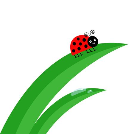 Fresh green grass stalk close up. Water drop set. Ladybug Ladybird insect.