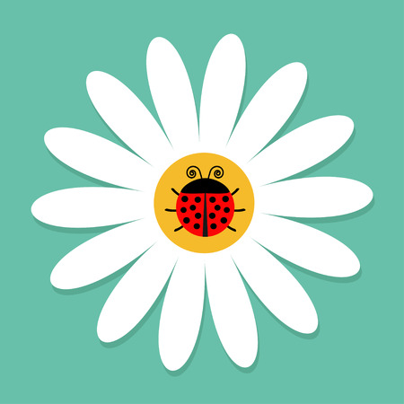 Ladybird Ladybug insect on white daisy chamomile. Camomile icon. Cute growing flower plant collection. Love card. Cartoon character.