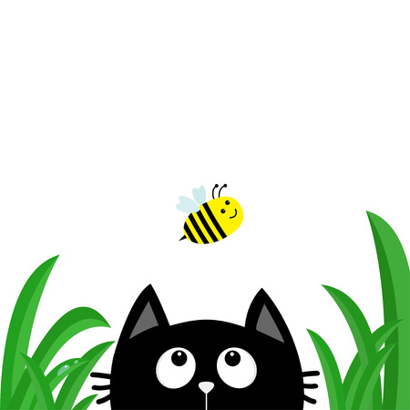 Black cat face head silhouette looking up to flying bee. Green grass dew drop.