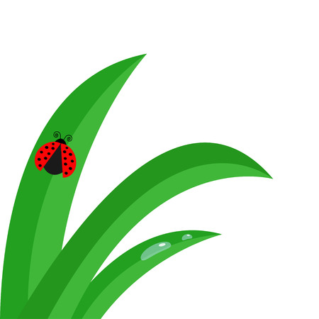 ladybird: Fresh green grass stalk close up
