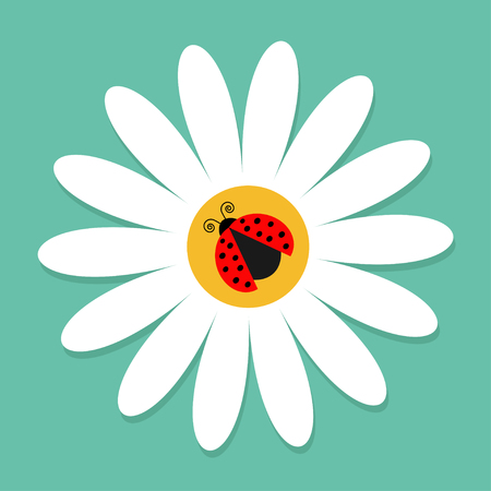 Ladybug Ladybird insect on white daisy chamomile. Camomile icon. Cute growing flower plant collection. Love card. Cartoon character. Flat design. Green background. Isolated. Vector illustration
