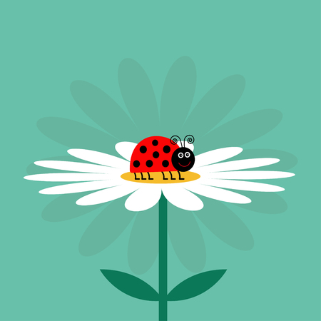 daisy wheel: Ladybug Ladybird insect. White daisy chamomile. Cute growing flower plant collection. Love card. Camomile icon. Cartoon character. Illustration