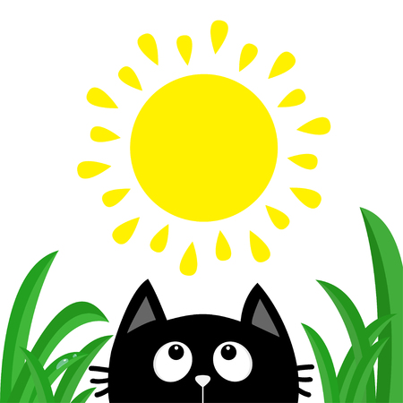 Black cat face head silhouette looking up to sun shining. Green grass dew drop. Cute cartoon character. Kawaii animal. Baby card. Pet collection. Flat design style. White background. Isolated Vector