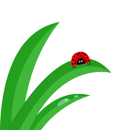 grass close up: Ladybug Ladybird insect. Fresh green grass stalk close up. Morning water drop set. Cute cartoon baby character.