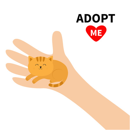 Adopt me. Hand arm holding orange red cat. Animal pet. Helping hands concept. Funny gift. Cute cartoon character. Close up body part. Flat design style. White background. Isolated. Vector illustration Çizim