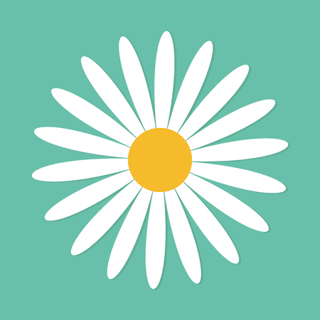daisy wheel: White daisy chamomile. Cute round flower plant collection. Love card. Camomile icon Growing concept. Flat design. Green background. Isolated. Vector illustration