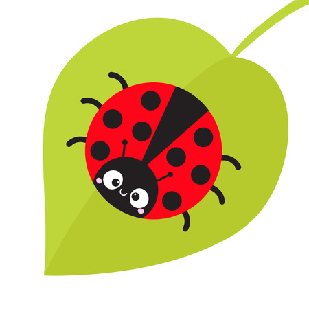 Cute cartoon lady bug sitting on green leaf. Cute icon. Cartoon funny character. Smiling face. White background. Isolated. Baby illustration. Flat design. Vector illustration Ilustração