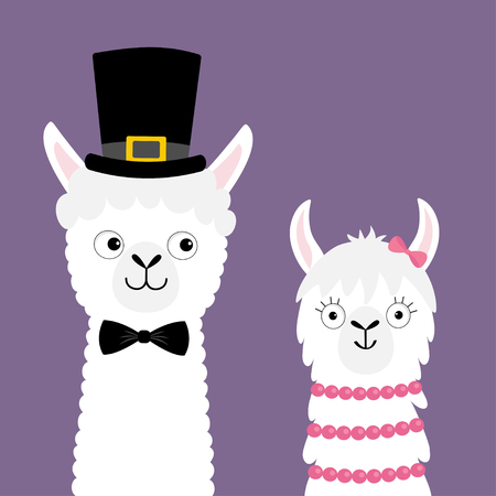 Llama alpaca animal set. Love couple. Happy Valentines Day. Girl Boy. Black hat. Face neck. Fluffy hair fur. Cute cartoon funny kawaii baby character. Love card. Flat design. Violet background. Vector