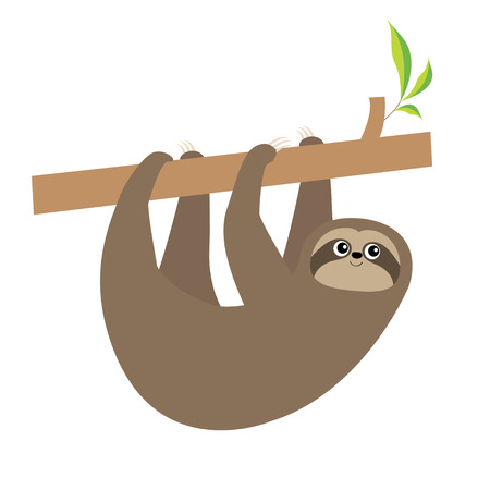 Sloth hanging on tree branch . Cute cartoon kawaii baby character. Wild jungle animal collection. Kids education. Isolated. White background. Flat design. Vector illustration