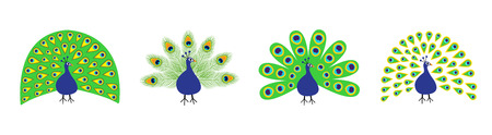 Peacock set line. Feather out open tail. Beautiful Exotic tropical bird. Zoo animal collection. Cute cartoon character. Decoration element. Flat design. White background. Isolated. Vector illustration Stock Illustratie