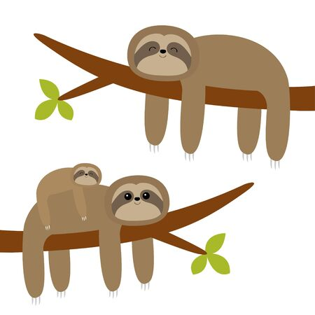 Sloth hanging on tree branch leaf. Cute cartoon kawaii funny lazy character set. Mother and baby. Wild joungle animal collection. Kids education. Isolated. White background. Flat design Vector