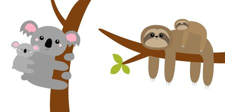 Koala bear. Sloth hanging on tree branch leaf. Cute cartoon kawaii funny lazy character set. Mother and baby. Wild joungle animal collection. Kids education. White background. Flat design Vector