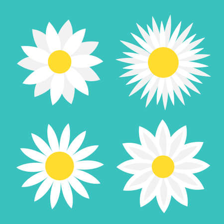 Camomile set. Four white daisy chamomile icon. Cute round flower plant collection. Love card symbol. Yellow circle. Growing concept. Flat design. Green background. Isolated. Vector illustration 向量圖像
