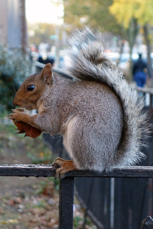 squirrel new york usa city harlem bronx .