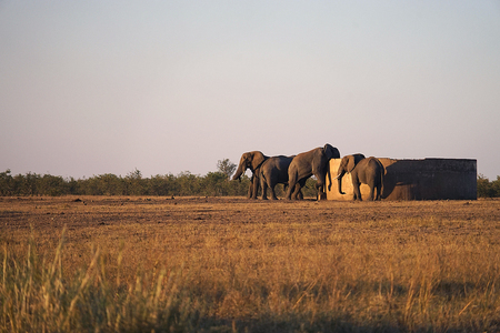 African Elephant Kruger in National Park wilderness at the Watertank . Stock Photo