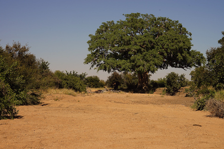 African Street in the Wilderness with Tree