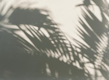 白い壁にヤシの葉影