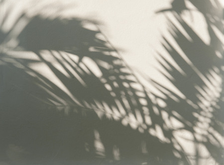 Palm leaf shadows on a white wall Stock Photo