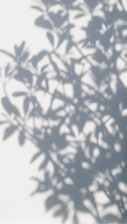 tree shadow on the white wall pattern