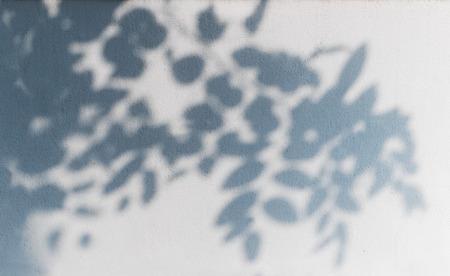 Baum Schatten auf die weiße Wand Muster