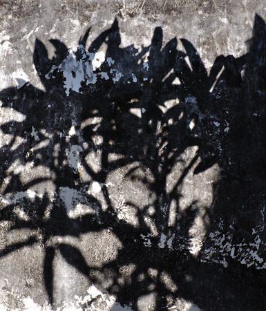 nearness: tree shadow on the wall pattern