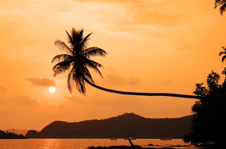 sunup: coconut tree hanging over the beach at sunset