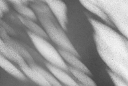 Palm Blatt-Schatten auf einer weißen Wand Standard-Bild