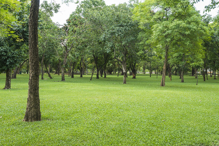 tree in field: Green lawn with trees in park