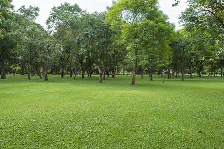 country park: Green lawn with trees in park