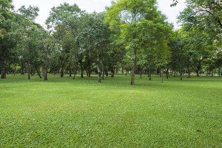 Groen grasveld met bomen in park