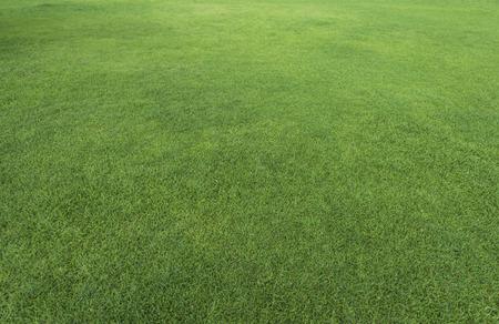 Grünes Gras Textur aus einem Feld Lizenzfreie Bilder