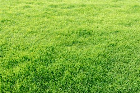 Close-up beeld van verse lente groen gras Stockfoto