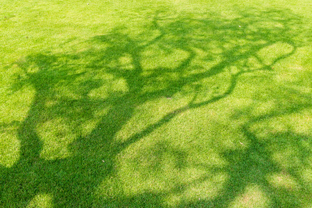 connectedness: Tree shadow on short green grass in spring Stock Photo