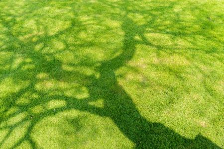 봄에서 짧은 녹색 잔디에 나무 그림자