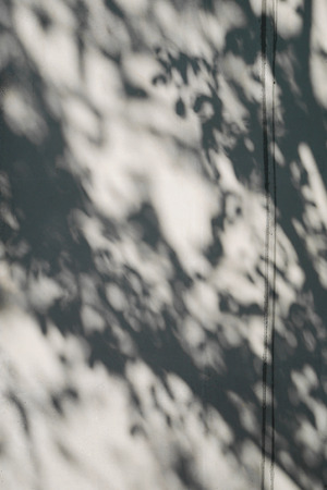 nearness: tree shadow on the white concrete wall pattern Stock Photo