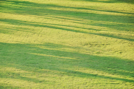 nearness: abstract background of tree shadow on grass field