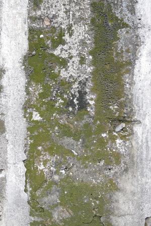 green algae: concrete wall with grunge texture and moss green algae , texture background Stock Photo