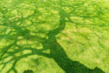Tree shadow on short green grass in spring Stock Photo