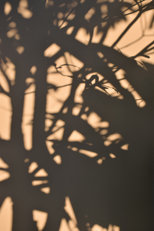 nearness: tree shadow on the brown concrete wall background Stock Photo
