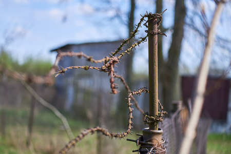 Old rusty post with barbed weave wire