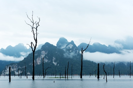 Dead trees standing in big lake  . Stock Photo - 8653876