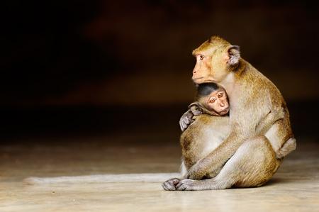 b�b� singe: B�b� singe avec m�re dans le temple de Tha�lande.
