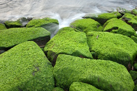 Seaweed are grows on rocks at beach photo