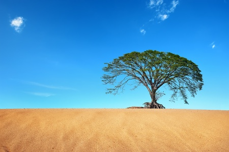 desert with big tree in blue sky photo