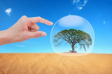 Hand protect  tree in desert  Stock Photo - 10020287