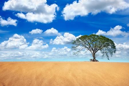 big tree in desert  photo