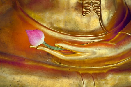 lotus temple: Lotus in hand image of buddha