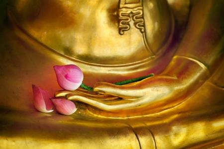 flor de loto: Lotus en la imagen de la mano de buda