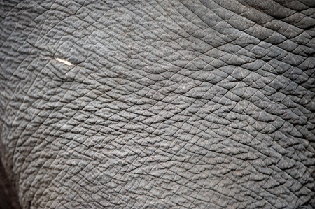 human skin texture: close up of elephant skin